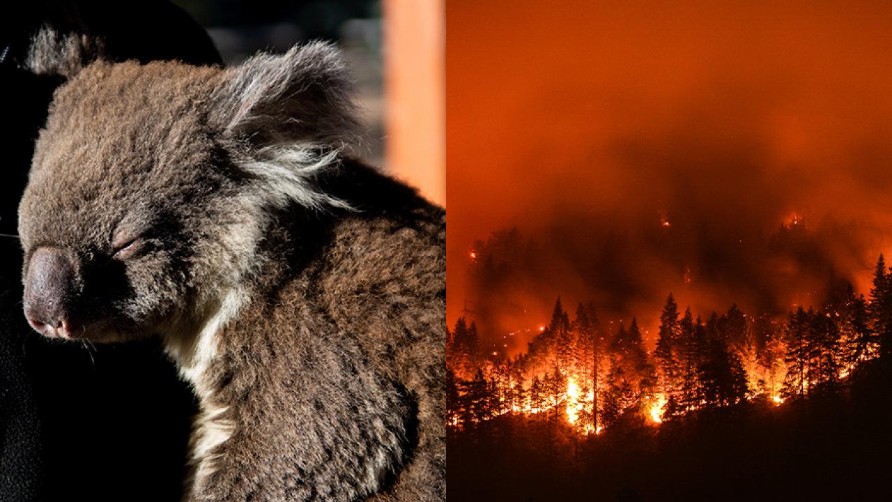 NASA, Avustralya yangını fotoğraflarını yayınlandı!