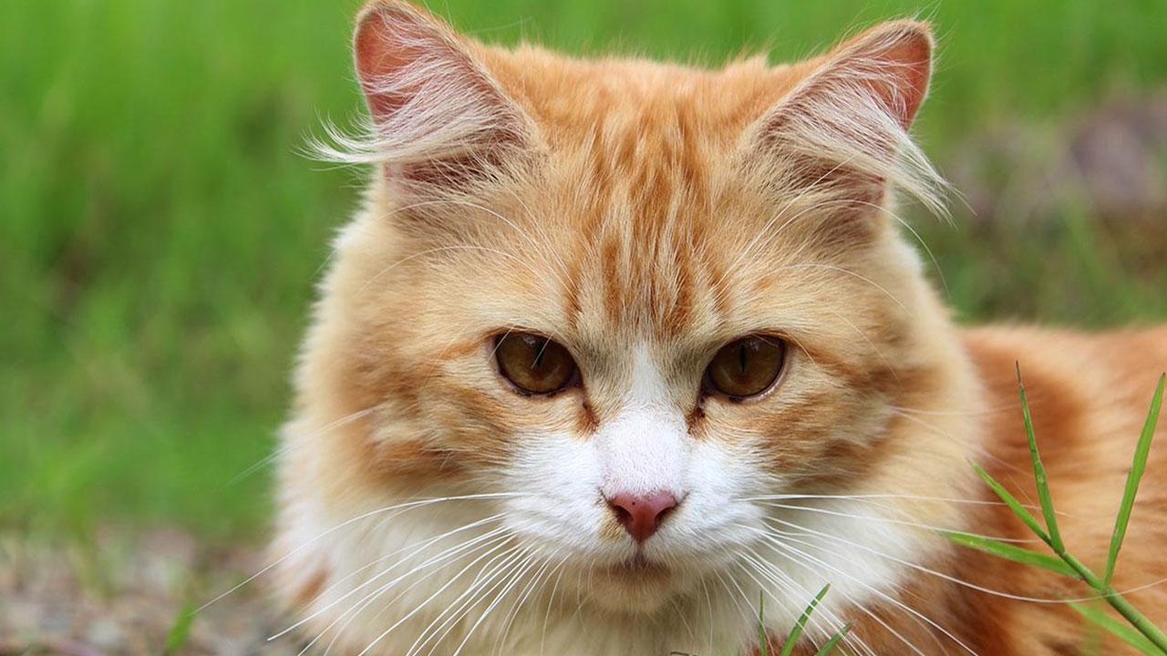 MeowTalks kedinizin ne dediğini size söylüyor